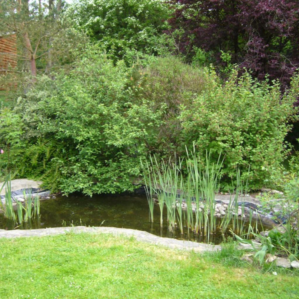 Bassins d 39 agr ment paysagiste jardinier yvelines 78 for Jardinier paysagiste 78