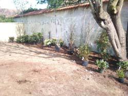 chantier-plantations-9