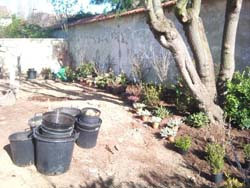 chantier-plantations-10