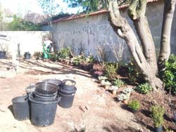 chantier-plantations-11