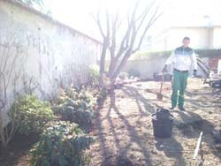 chantier-plantations-12